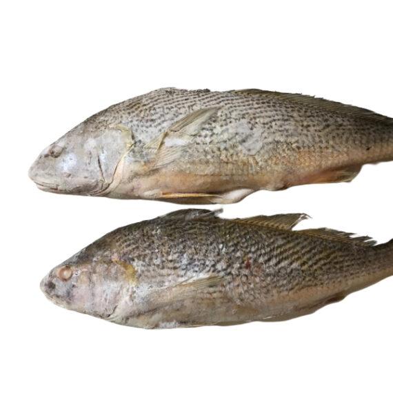 Croacker-Fish