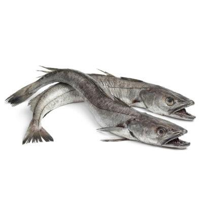 Hake-Fish