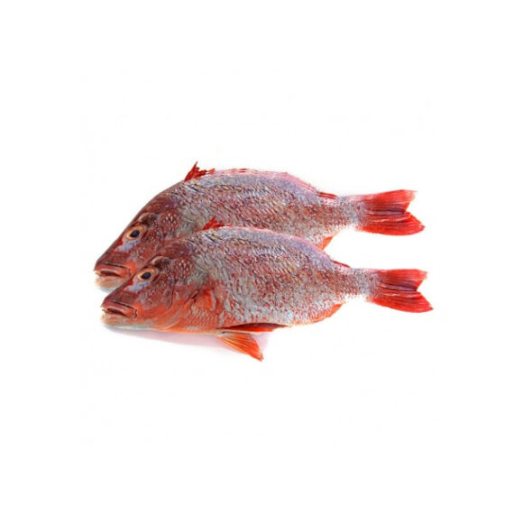 Red-Bream-Fish